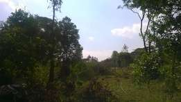 Half Acre Land for Sale In Karen