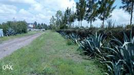 Prime plots for sale in Kamulu with title deed