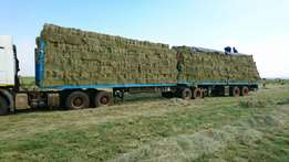 Eragrostis Square Bales For Sale - Honeydew/Muldersdrift/Krugersdorp