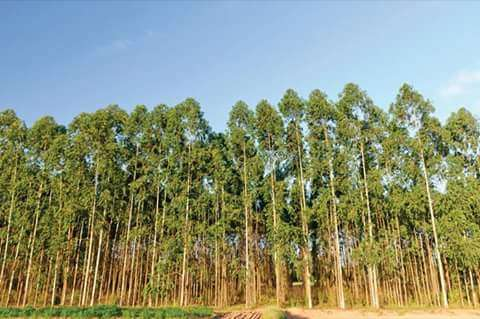 Eucalyptus plantation on sale near murang'a town Muranga Town - image 2