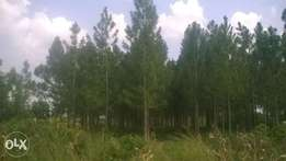 10 acres in kikyusa at 3.5m each