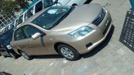 Toyota Axio Gold colour