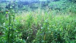 3.5 acres of land for sale in Kibiito town, Kabarole at 80 million