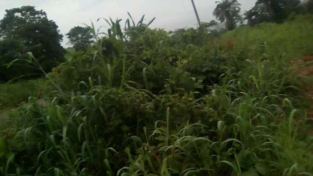 30plots of land located in Ugwuogo nike Enugu East Nigeria Enugu North - image 1