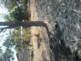 40*80 plot at kenol. Approx 1km off tarmac. Instlallmnts allwd.