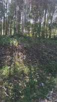 Land for sale 1 acre in Mindo