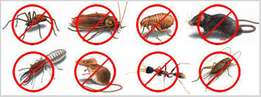 Fumigation Cockroaches and Bedbugs