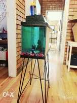 Average size fish tank with steel stand.