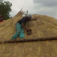 Thatch roof's