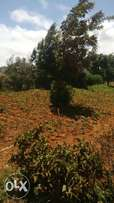 1 acre at gikambura