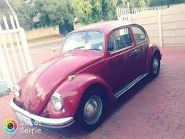 Old VW Beetles wanted