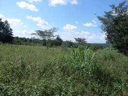50X100ft plot in wakiso mendee at 12M