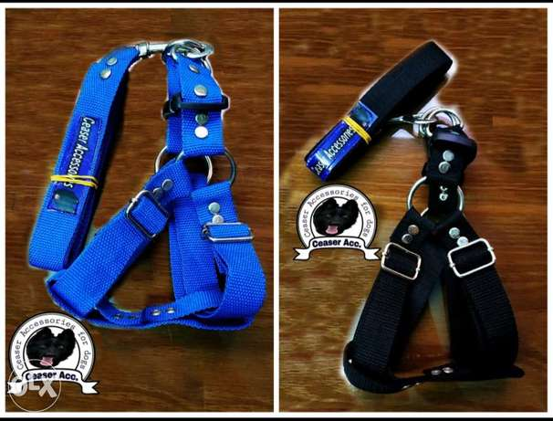 Ceaser Accessories for dog
