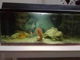Cold water fish tank with fish and all accessories