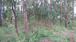 Nyangati, Kirinyaga - 5 Acre farm 1.9km from Meru-Nairobi Highway