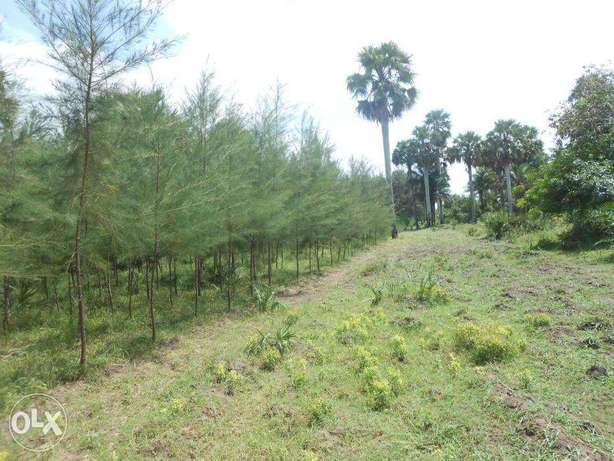 11 acres with casuarinas trees,msambweni Kwale - image 4