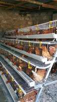 Chicken cages for 1000chicken