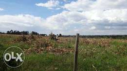 Prime agricultural and residential land in Trans Nzoia.