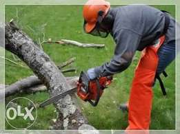 Tree Felling and Stump removal and Landscaping