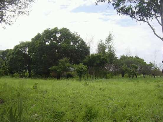 Plots for sale Vipingo - image 3