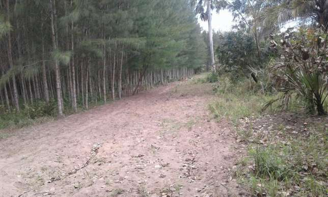 11 acres under casuarina plantation Kwale - image 2