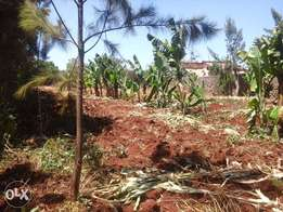 1/4 of an acre for sale in kiamumbi at 8.5m