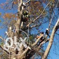 Randburg Tree Cutting and removals