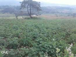 63 acres for sale Tumaini-Nyandarua
