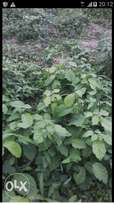 Plot of land for sale at ABC gardens sango - ifo ogun
