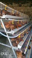 Layers cage for 500chicken on offer.