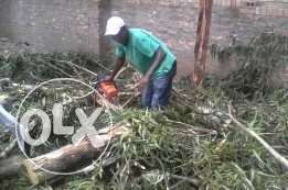 We do Tree cutting for more info call us