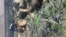 Tree cutting and landscaping