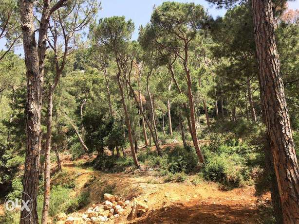 BANKER'S CHECK- Land in Jouret El Ballout, Metn