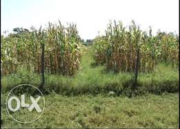 Prime land for Sale in Rongo with complete tittle deed 50ft x 100ft