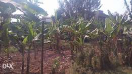 A commercial 50*100 plot in Kiamumbi area with a clean title