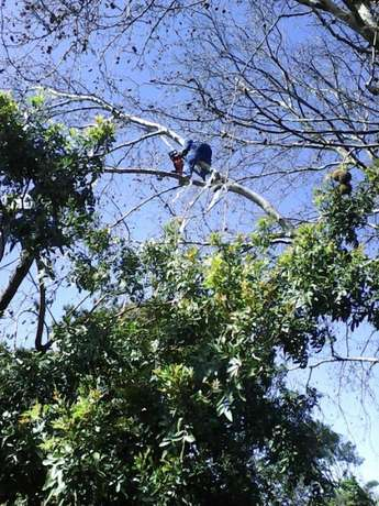 The bush clearing team Brackenfell - image 3