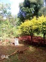 Good Land one acre 2m.