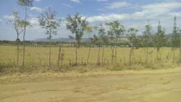 1/4 acre at kabarak
