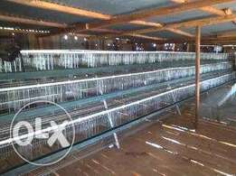 Chicken cages prices in kenya