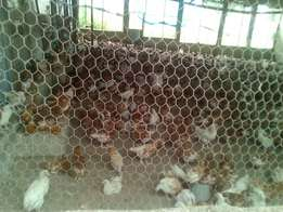 Poultry farm for lease today