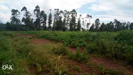 Prime land for sale for sale ,serious buyers only