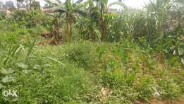 Cheap plot at Buziga for sale