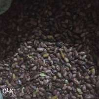 Nyayo beans for sale