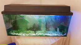 Tropical fishtank with everything included includes about 12 fish