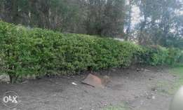 This is a prime 1/2 acre in Ongata Rongai.