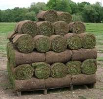 Top Quality Instant Lawn? Call us for a quote