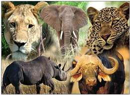 Watch the African Big five,Good rates for tours & Travel services.