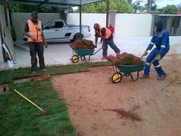 Quality Instant Lawn expert suppliers of fresh green grass ( PTA ,JHB)