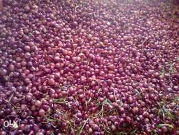 Onions for sale .dry and in store ready for selling.