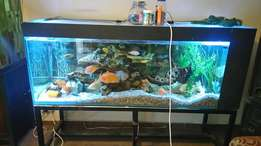 Big fish tank 1.8m for sale or swap for iPhone 6plus